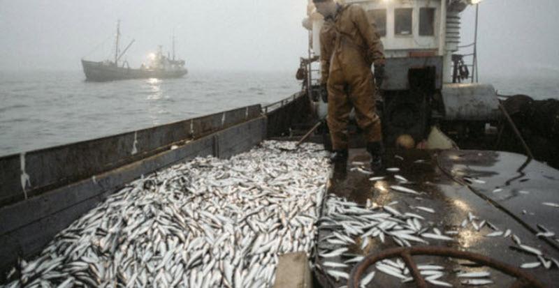 Евросоюз выгоняет рыбаков из Прибалтики в Россию